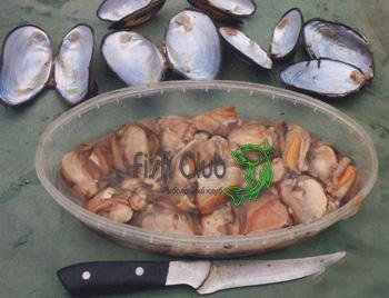 наилучшие прикормки ловли рыбы