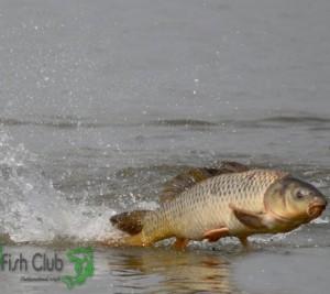 Где искать активную рыбу