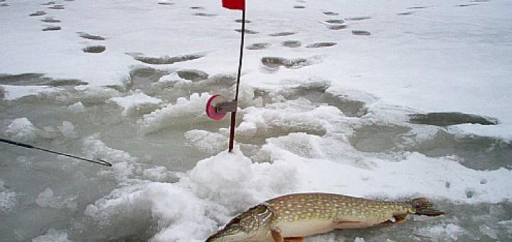 зим. рыбалка на щуку