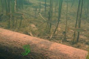 Место стоянки плотвы