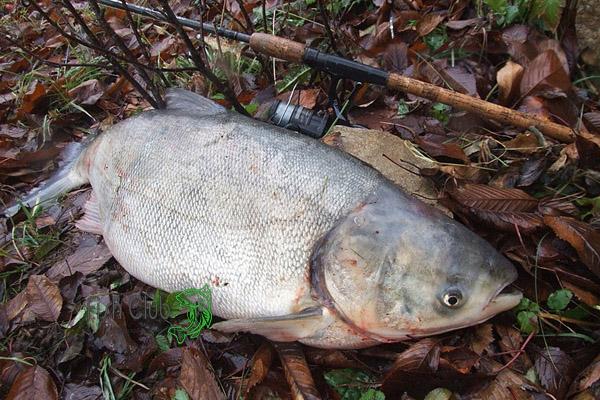 рыбалка на толстолобика на кубани