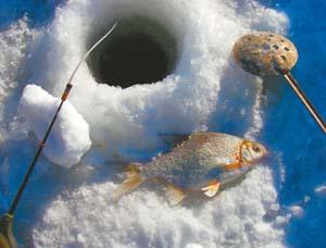 Ловля гутеры зимой на мормышку