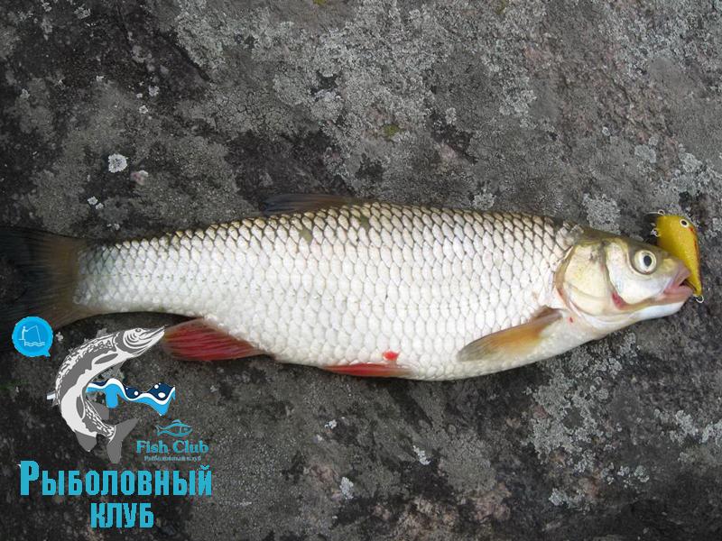 kak-pojmat-golavlya-vesnoj-3