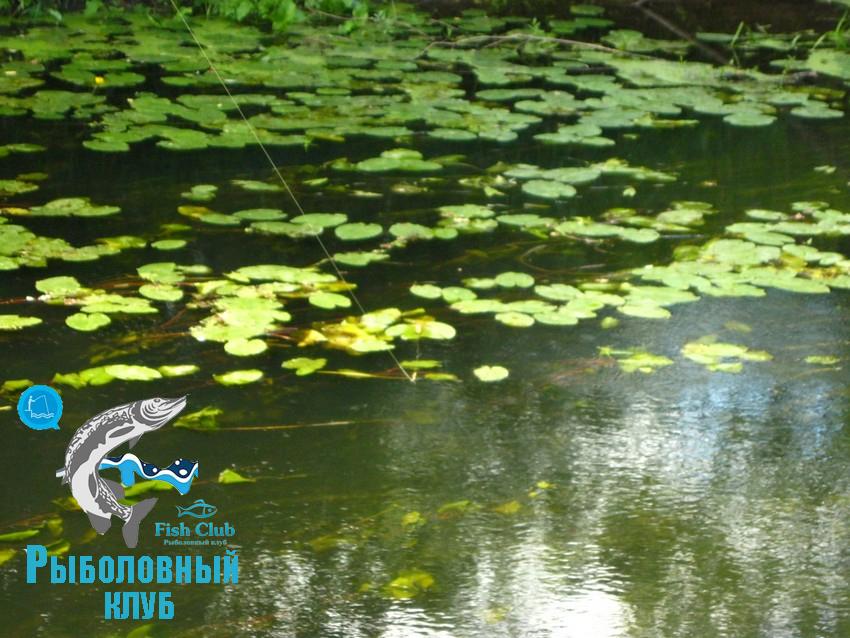 odin-vyxod-na-rybalku-13