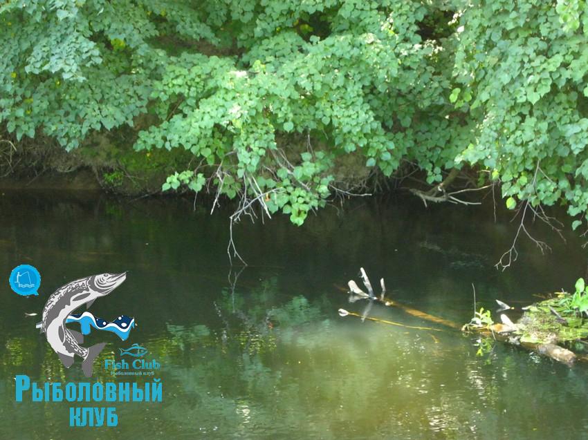 odin-vyxod-na-rybalku-16